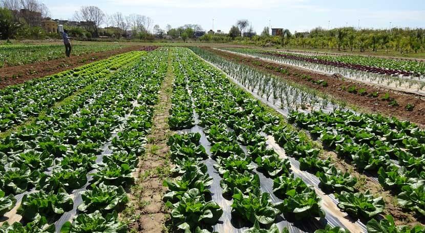 ¿ dónde proviene contaminación química hortalizas?
