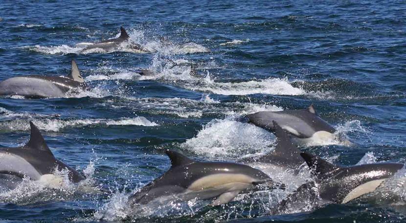 delfines Océano Índico, 10 veces más contaminados que Mar Alborán