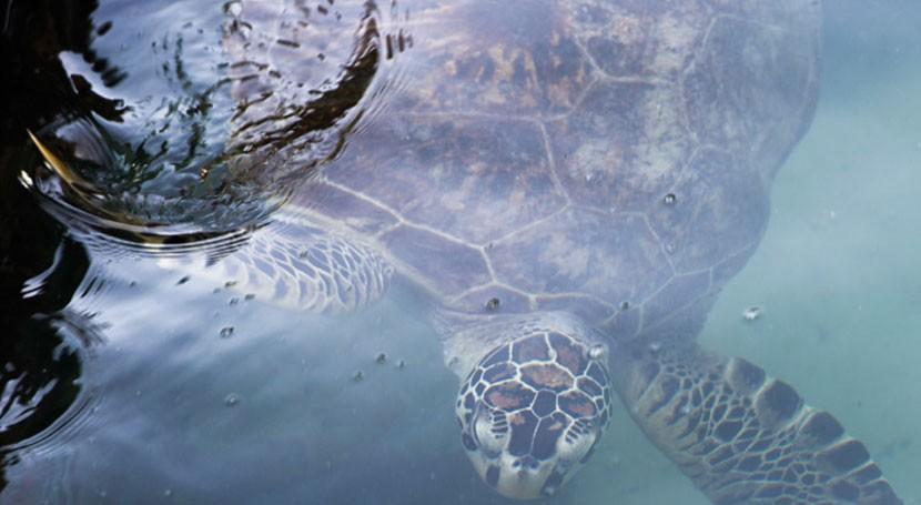 Así combate Ecuador marea plástico