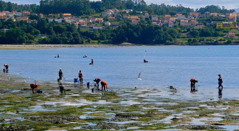 Abono partir algas, última apuesta empresa gallega Ecocelta