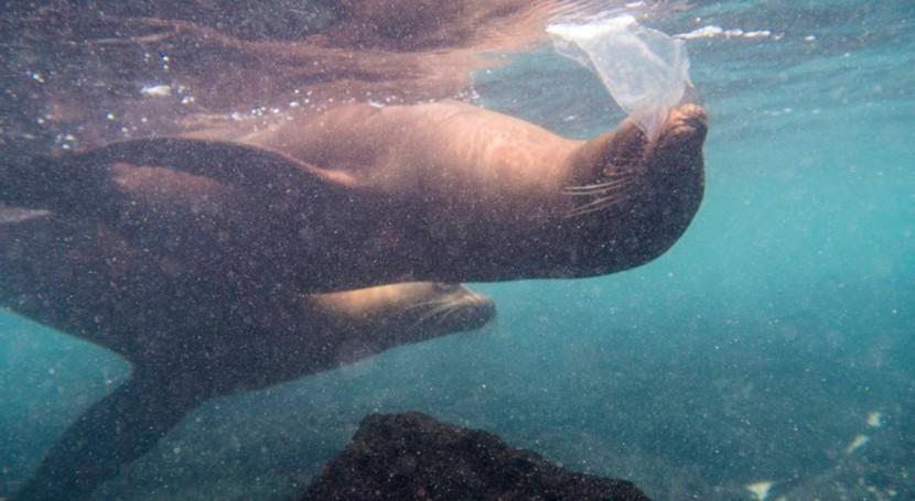 Leones marinos, tortugas e iguanas se topan ya plástico islas Galápagos