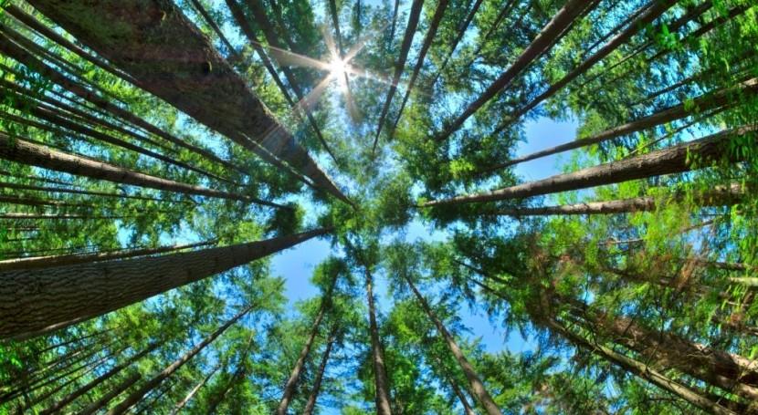 servicios acreditados ofrecen máximas garantías control calidad aire