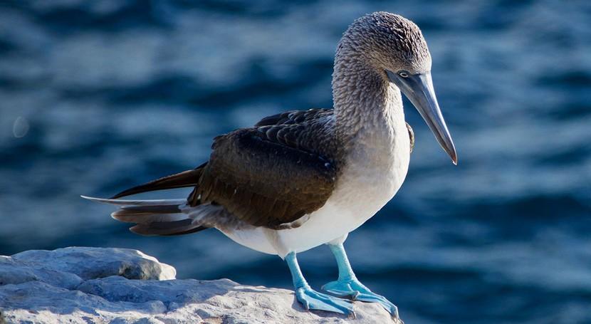 COVID-19 amenaza biodiversidad Islas Galápagos y lucha plástico