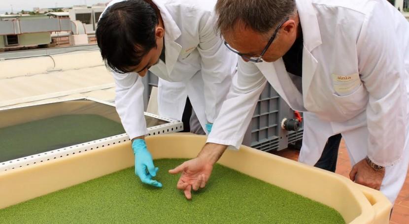 residuo ganadero materia prima piensos y biofertilizantes