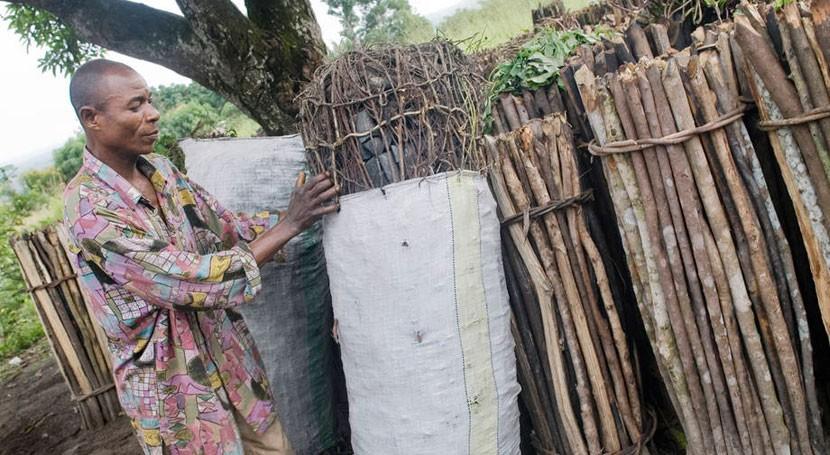 uso más ecológico madera como fuente energía es clave mitigar cambio climático