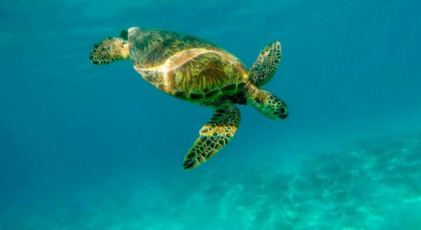 Mares Limpios: cómo países pueden revertir marea plástico
