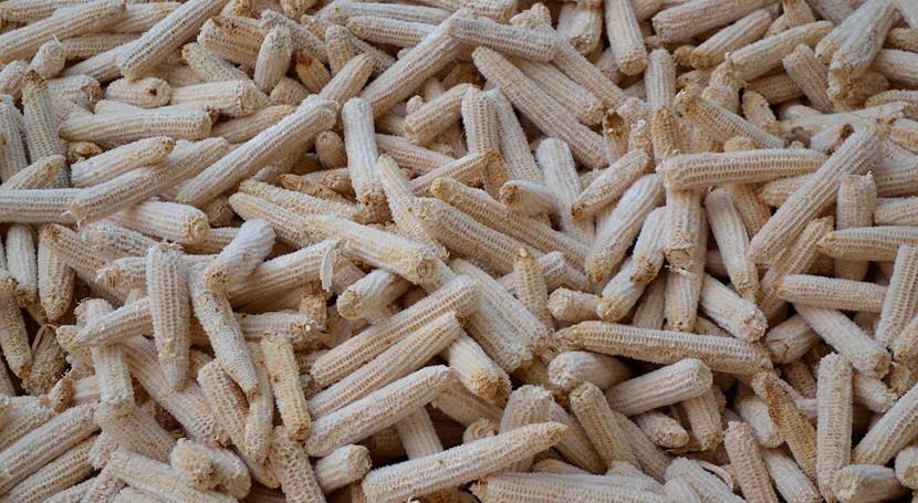 zeína, material natural obtenido maíz: alternativa sostenible al plástico