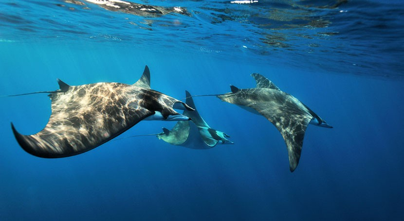 microplásticos asfixian al Mediterráneo