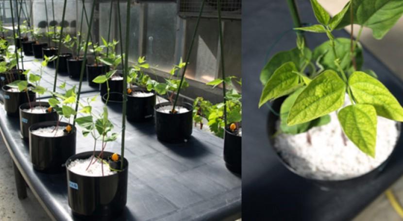 Nuevos fertilizantes micronutrientes más eficaces y sostenibles