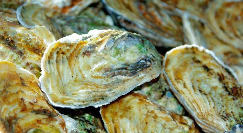 ostras, especialmente útiles estudiar concentración plata estuarios