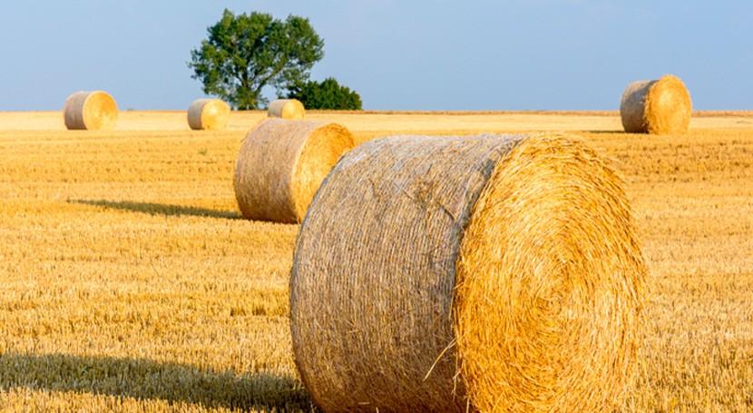 ¿Cómo convertir residuos paja trigo sustancias químicas ecológicas?