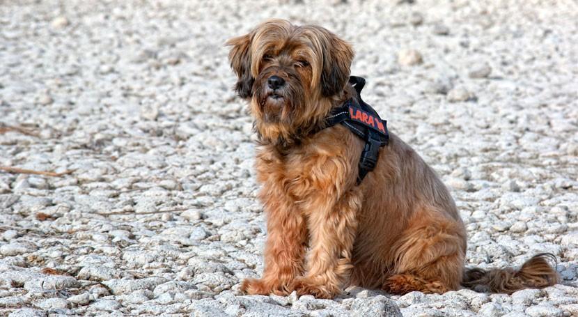 Paseo Gijón recordar dueños perros importancia recoger excrementos