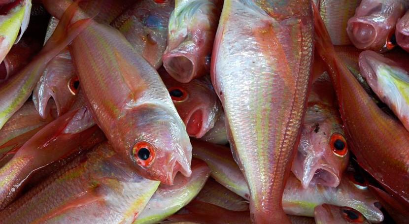 Fishchoice: ¿Cómo evaluar riesgo exposición químicos al ingerir pescado y marisco?