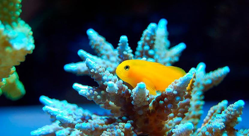 Niño podría aumentar presencia microorganismos tóxicos mar