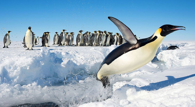 pingüinos transportan contaminantes suelo antártico culpa ser humano