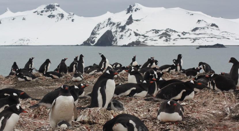 Hallan microplásticos dieta pingüinos Antártida