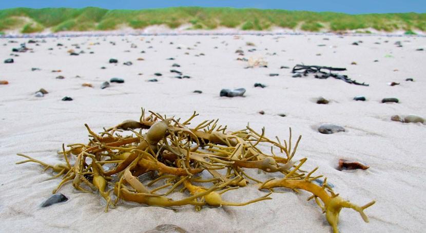 residuos marinos costa guipuzcoana, materia prima obtención nuevos materiales