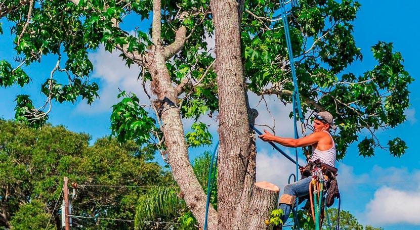 Proyecto Europruning convierte madera poda biocombustible