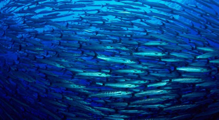 Cada vez más animales enferman o mueren residuos marinos