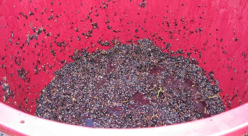 ¿Es posible nuevo uso residuos alimentarios?