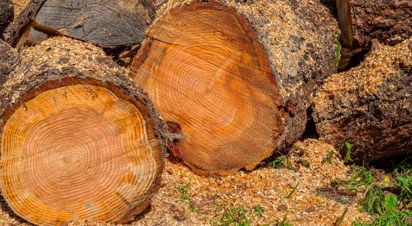 Diseñan nuevo sistema maximizar aprovechamiento biomasa agrícola