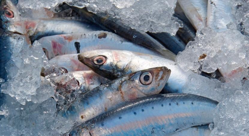 Más mitad sardinas y anchoas Mediterráneo occidental tienen microplásticos